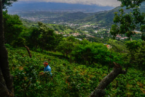 A coffee farmer weeds the fields on a mountainside overlooking the Valle del Sol.